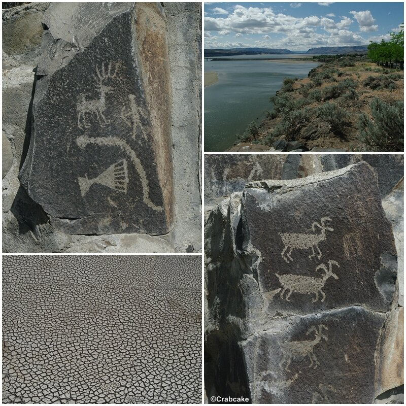 Ginkgo Petrified Forest State Park Petroglyphes Columbia River