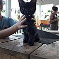 chaton trouvé sur une plage de Sainte Anne 1