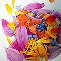 Fleurs : belles, du jardin à l'assiette