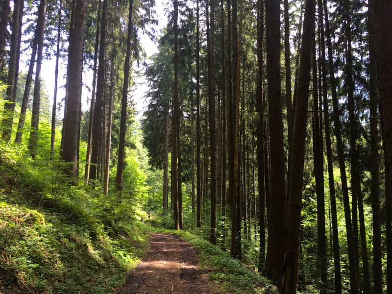 Dans les sous-bois en direction de Bernex