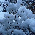 La neige au jardin de ville