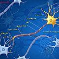 la neurone