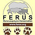 Férus : agir pour la protection du lynx et du loup !