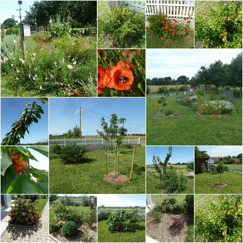 mai jardin