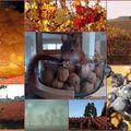 Retrospective 2008 : l'automne
