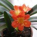 Dans la maison j'ai admiré mes plantes si