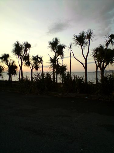 Palm trees under the sunrise