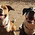 Ythos et Ona adoptés par 2 amies - Frère et soeur