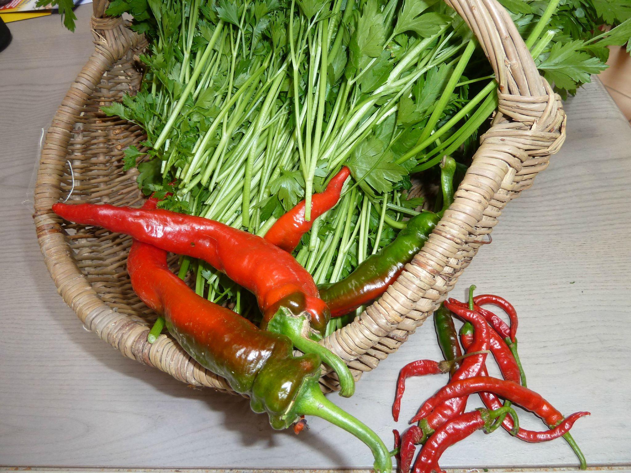 16-persil et piments www.passionpotager.canalblog.com