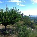 Panorama avec le Mont Ventoux