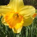 Du printemps...