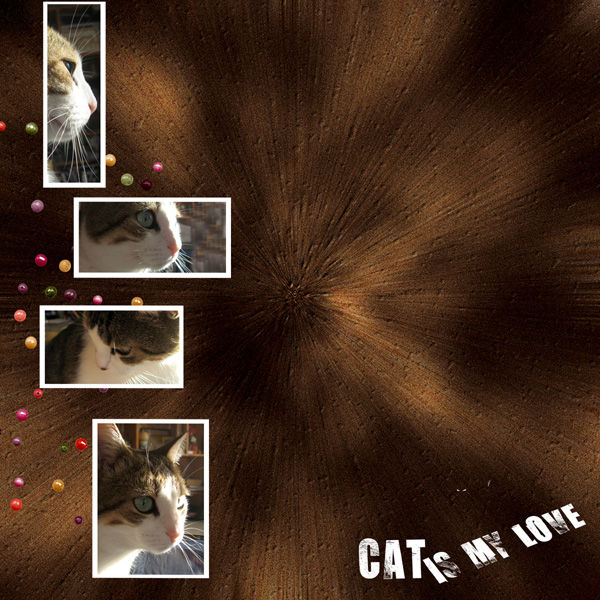 Cat is my love
