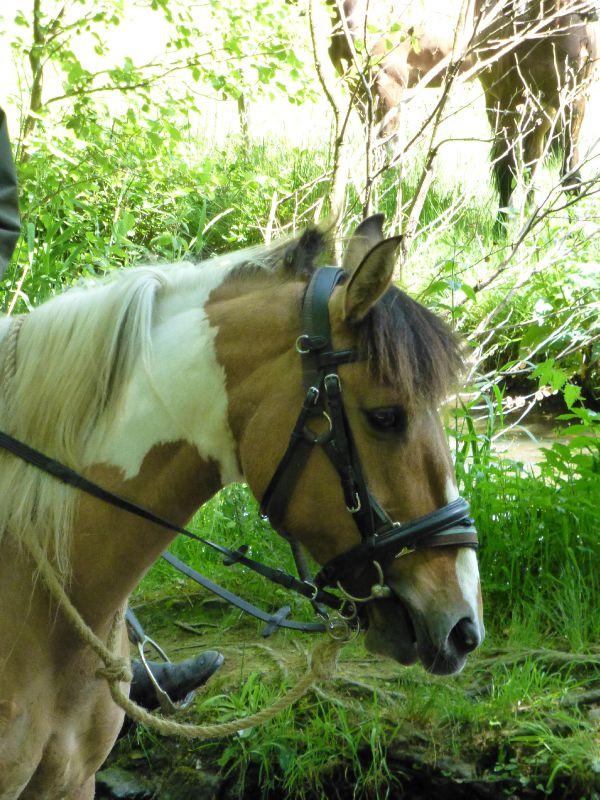 balade equestre gastronomique à La Lucerne d'Outremer (90)