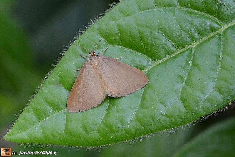 Une souris pas verte qui ronge les Euphorbes... - Le JardinOscope, toute la vie animale de nos parcs et jardins