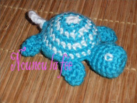 tortue turquoise