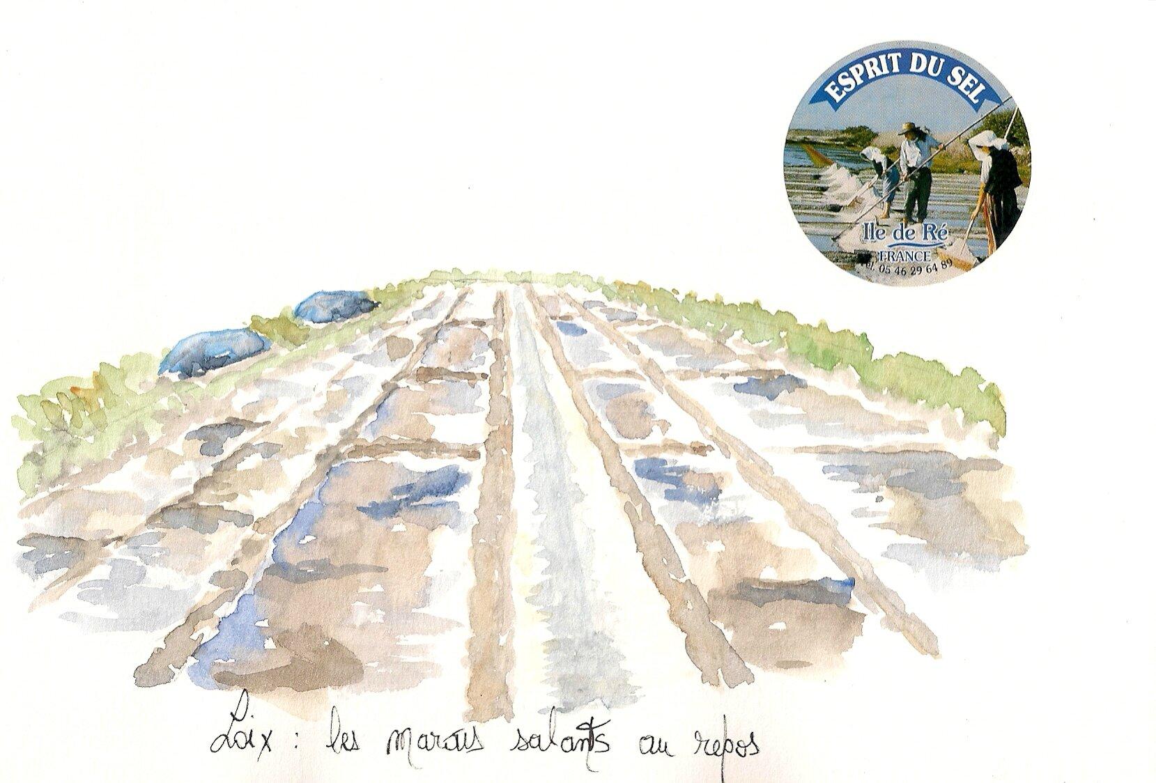Loix : les marais salants