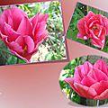 tulipes 2015_03_7
