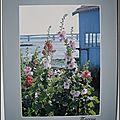 Cabane ostréicole et roses trémières