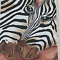 duo de zebres de près