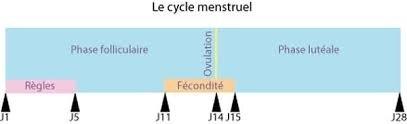 Calculer sa date ou période d'ovulation facilement : méthode, cycle...
