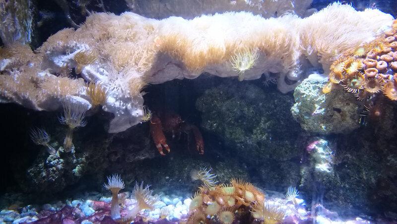 Biarritz, Musée de la Mer, Caraïbes, coraux et