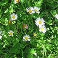 Mini défilé de printemps