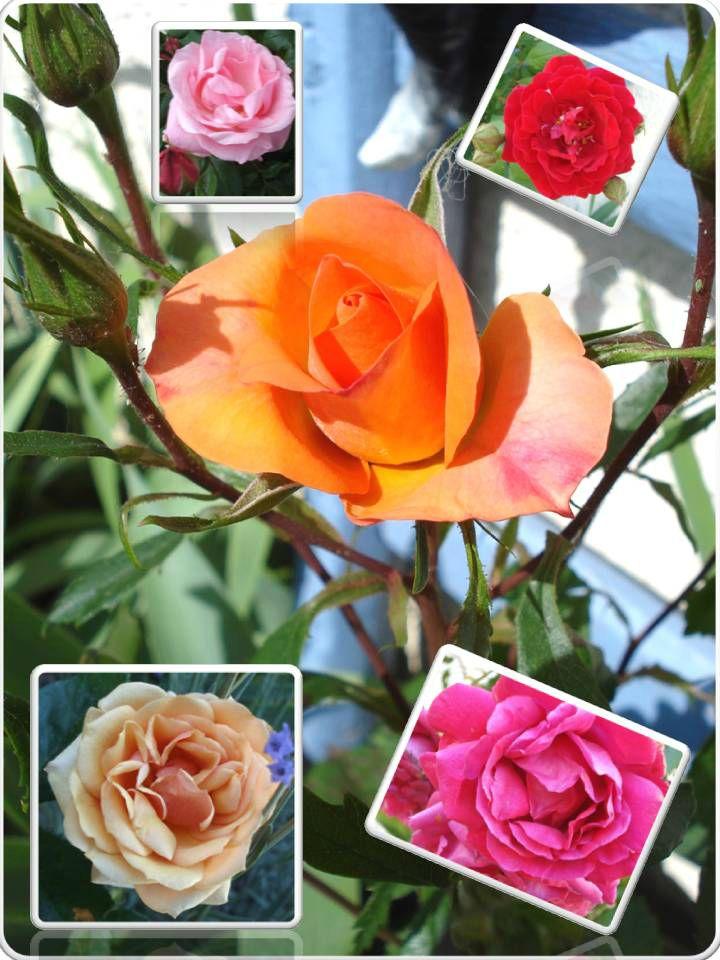 Fleurs 2009-2010 (41)
