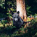 Câlin d'ours avec thérèse59, 19e inscrite