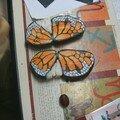 Papillon avec ou sans corps
