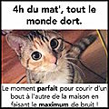 chats_nuit
