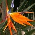 Les fleurs de notre jardin