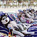 chien_vacances