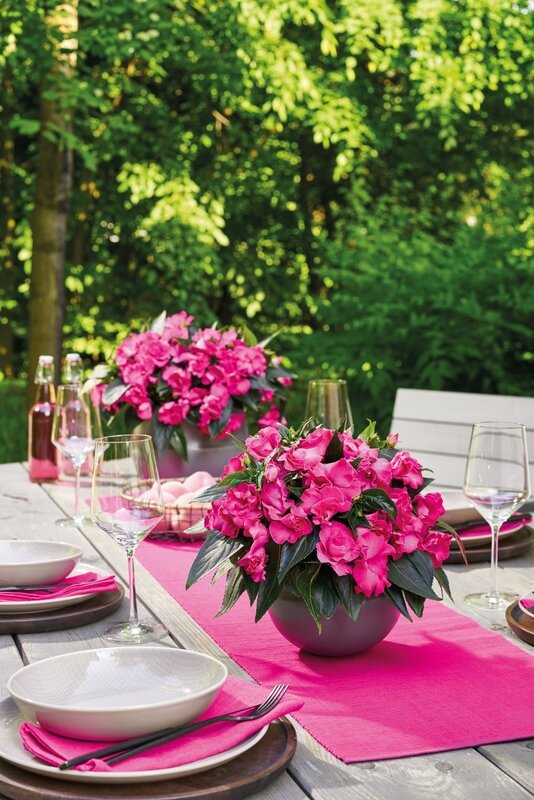 Impatiens-Roller-Coaster-Hot-Pink-lifestyle-NEW