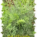 rue_officinale_diaporama