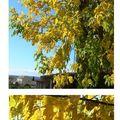 Soleil & feuilles d'automne