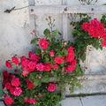 roses sur ridelle