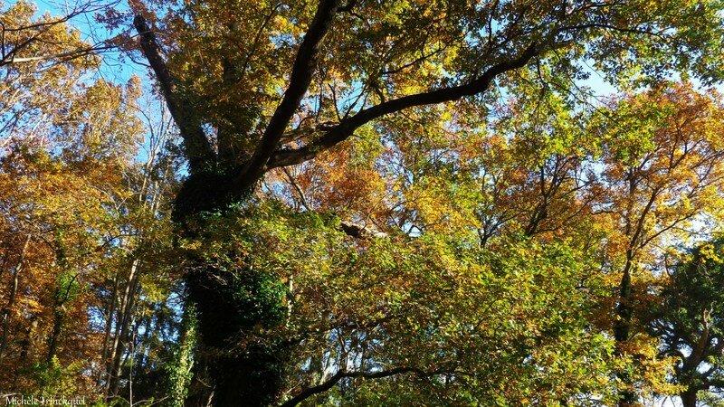 Feuillages automne 07121515