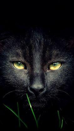 chat noir_2