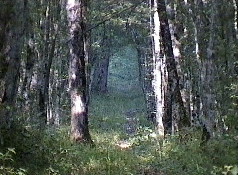 chasseur:bois