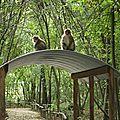 Terre de singes
