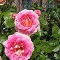 J'ecris en rose