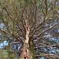Le vieil arbre et l'oiseau blanc