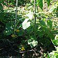 Quelques fleurs et autres du jardin