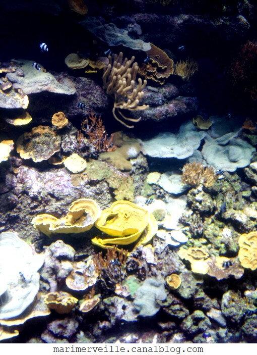 aquarium de paris - marimerveille