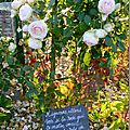 Windows-Live-Writer/Jardin_10232/DSCN0774_thumb