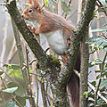 Cacahuète (j'ai ainsi nommé l'écureuil), vient tous les matins ...
