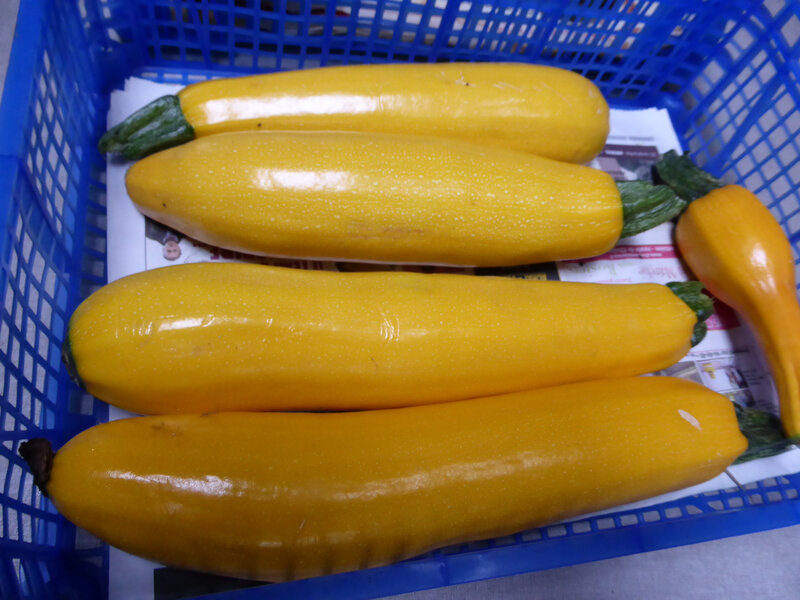 18-courgettes