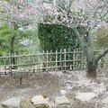 20 fev 07 kairakuen ume_18