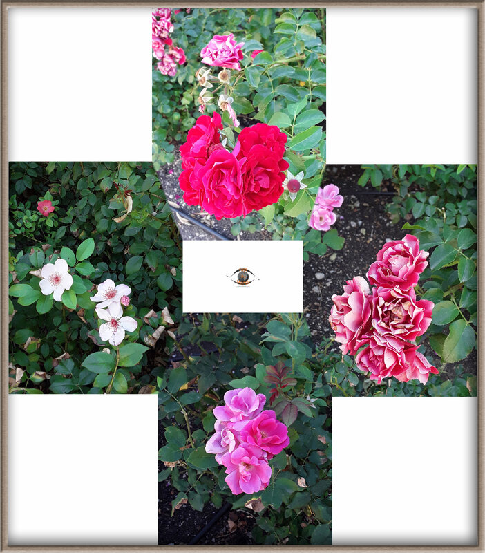Rose photomerge