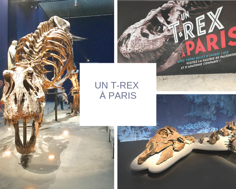 Un T-Rex à Paris ©Kid Friendly